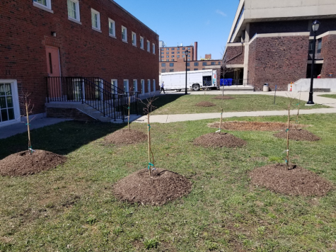 Tree-Huggers Rejoice: Understanding the significance of Buffalo State's Arbor Day celebration